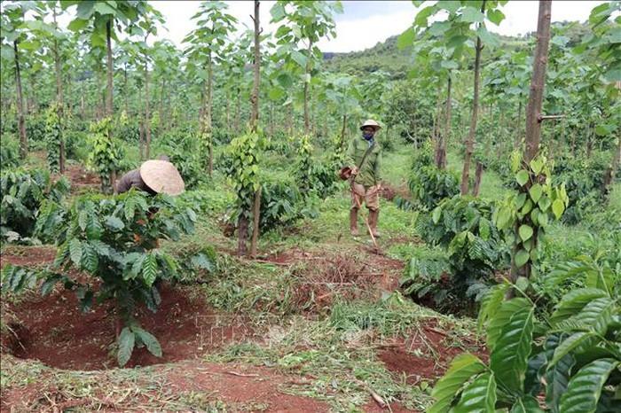 Ликвидация бедности в разных районах Вьетнама - ảnh 1