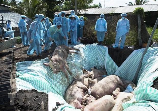 Hoa Kỳ hỗ trợ Việt Nam nghiên cứu vaccine dịch tả lợn châu Phi - ảnh 1