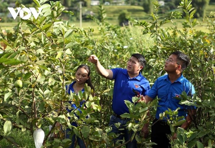 Thanh niên Lai Châu khởi nghiệp từ mô hình hợp tác xã - ảnh 2