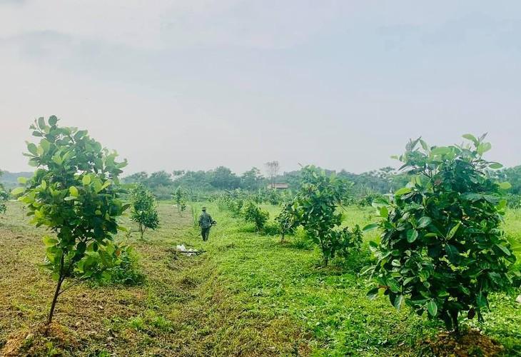 Son Ngọc - Khởi nghiệp với sản phẩm nông nghiệp sạch - ảnh 2