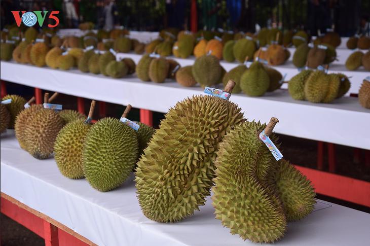 Festival Durian Khatulistiwa 2019, kebanggaan masyarakat Kalimantan Barat - ảnh 2