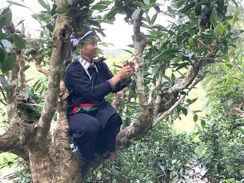 Tea brewing competition as part of Hoang Su Phi terraced field festival  - ảnh 1