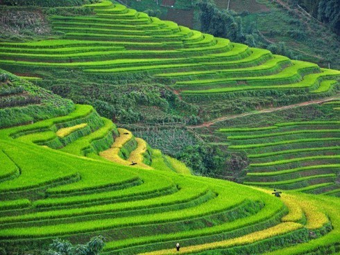Sapa, Ninh Binh listed among 14 up-and-coming destinations in Asia to visit - ảnh 1