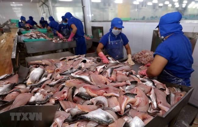 Антидемпинговые пошлины на экспорт пангасиуса из Вьетнама в США были снижены - ảnh 1