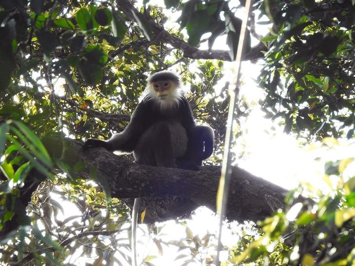 Обнаружено «сокровище» в виде редких диких животных в провинции Контум - ảnh 1