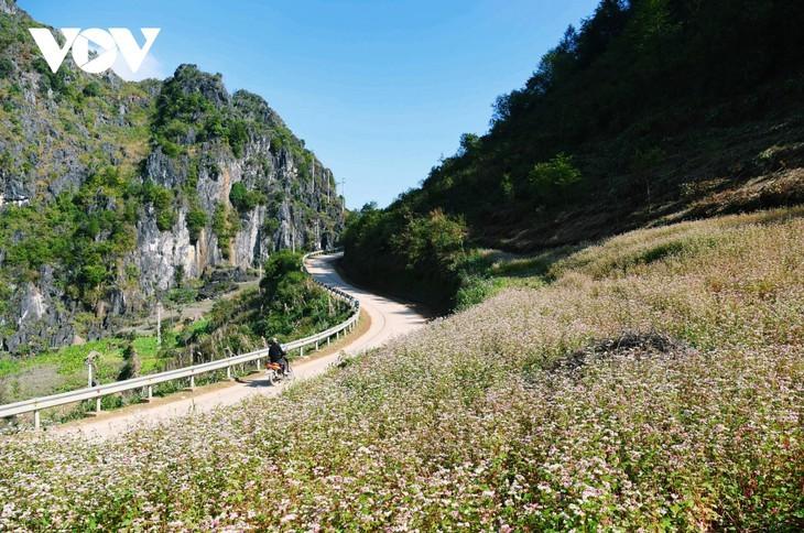 Провинция Хазянг в сезон цветения гречихи - ảnh 1