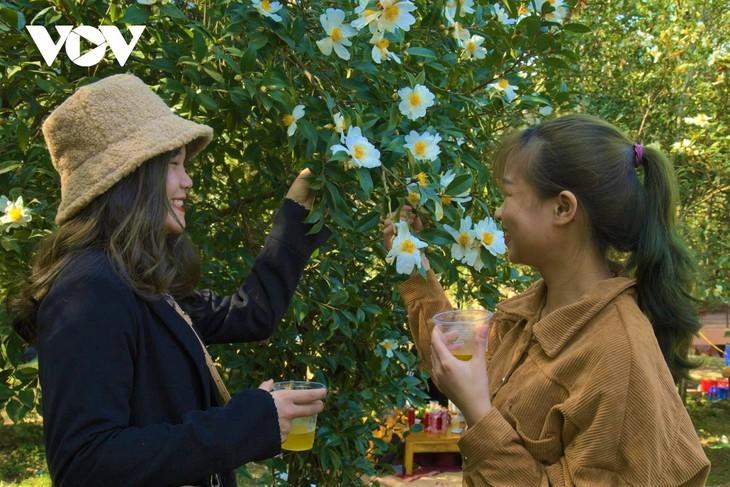 Уезд Биньлиеу в сезон цветения белой камелии масличной - ảnh 11