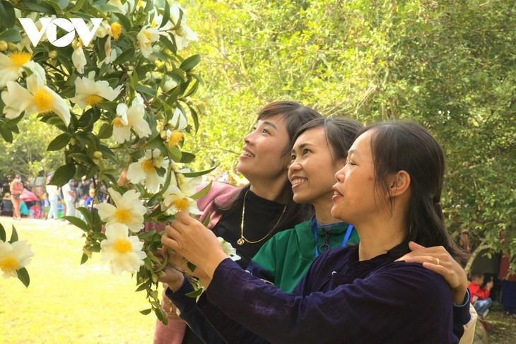 Уезд Биньлиеу в сезон цветения белой камелии масличной - ảnh 9
