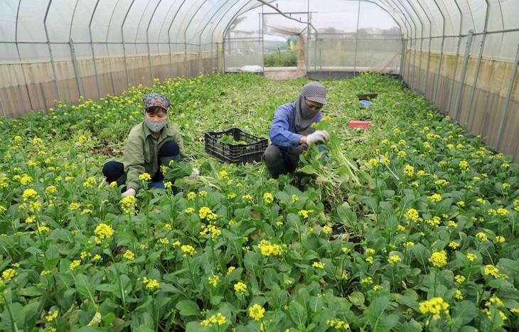 За первые 3 месяца 2021г. объем экспорта овощей и фруктов Вьетнама превысил 944 млн. долларов - ảnh 1