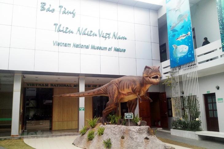 Музей природы Вьетнама является прекрасным местом для знакомства с природой Вьетнама и идеальным адресом для тех людей, которые любят изучать мир природы и науку. - ảnh 1