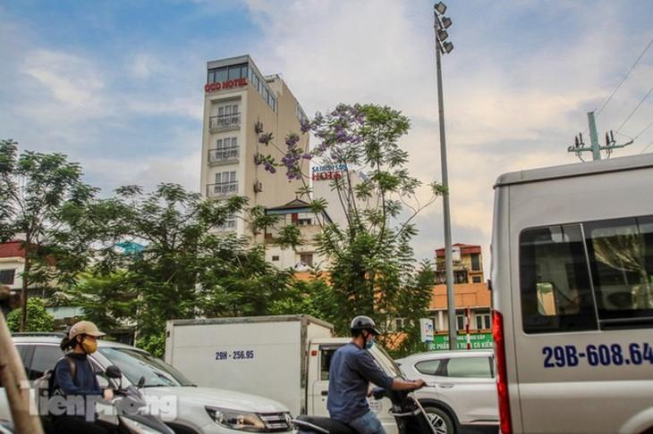Hanoi capital dotted with Da Lat purple flamboyant flowers - ảnh 10