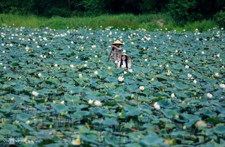The bucolic charm of a Hue summer - ảnh 8