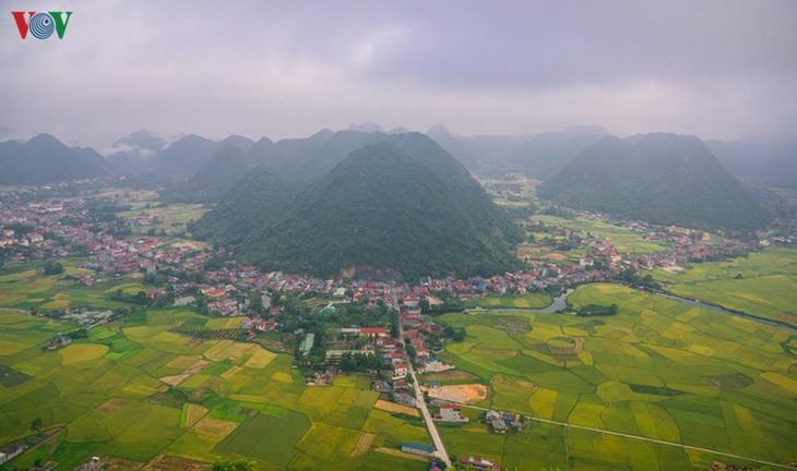 Bac Son rice fields turn yellow amid harvest season - ảnh 15