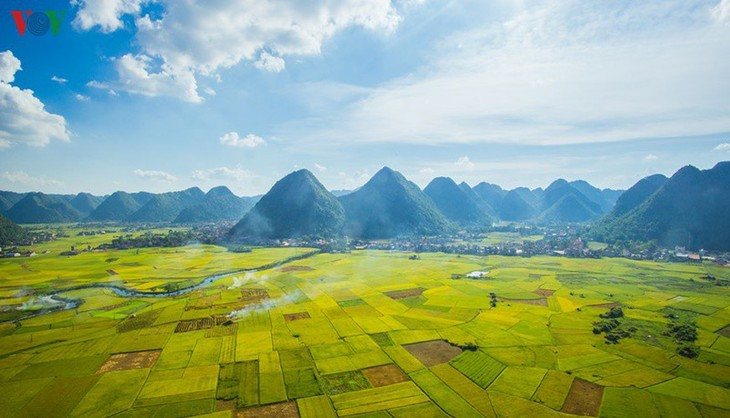 Bac Son rice fields turn yellow amid harvest season - ảnh 2