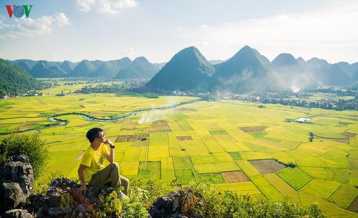Bac Son rice fields turn yellow amid harvest season - ảnh 3