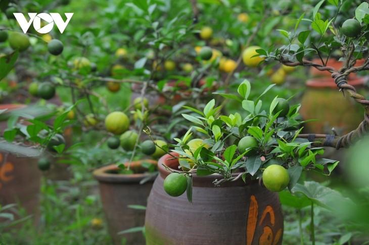 Mini bonsais favourites with customers ahead of Tet - ảnh 10