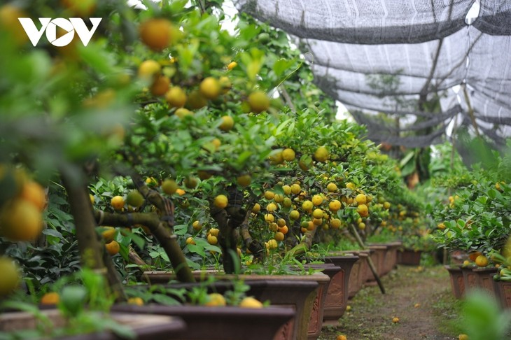 Mini bonsais favourites with customers ahead of Tet - ảnh 11