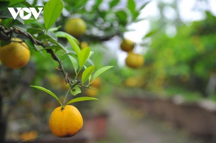Mini bonsais favourites with customers ahead of Tet - ảnh 12