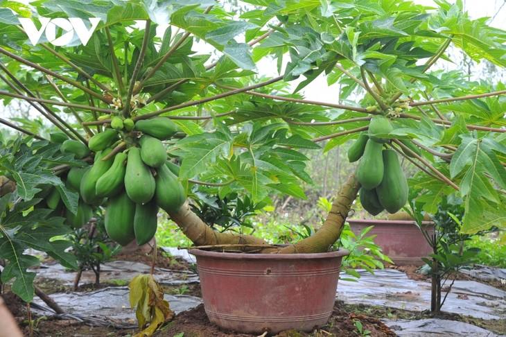 Mini bonsais favourites with customers ahead of Tet - ảnh 1