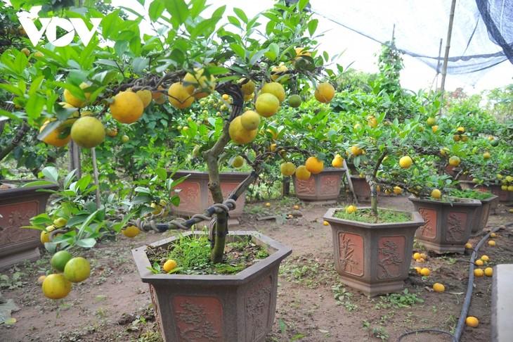 Mini bonsais favourites with customers ahead of Tet - ảnh 7