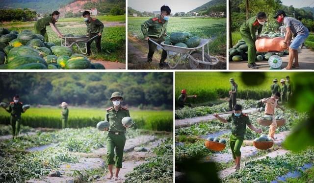 Kết nối – tiêu thụ nông sản Việt trong đại dịch COVID-19 - ảnh 2