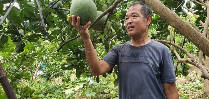 War invalid helps farmers in agricultural production  - ảnh 1