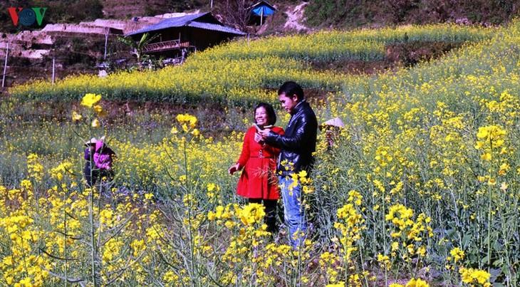 Ảnh: Mùa vàng hoa cải trên danh thắng ruộng bậc thang Mù Cang Chải - ảnh 10