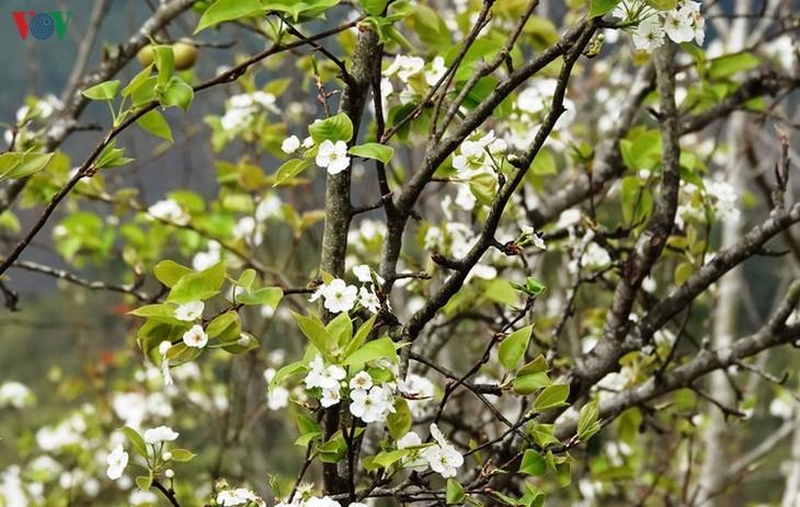 Ảnh: Mùa vàng hoa cải trên danh thắng ruộng bậc thang Mù Cang Chải - ảnh 13