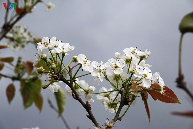 Ảnh: Mùa vàng hoa cải trên danh thắng ruộng bậc thang Mù Cang Chải - ảnh 14