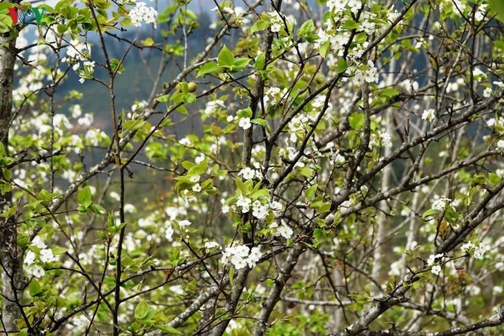 Ảnh: Mùa vàng hoa cải trên danh thắng ruộng bậc thang Mù Cang Chải - ảnh 15