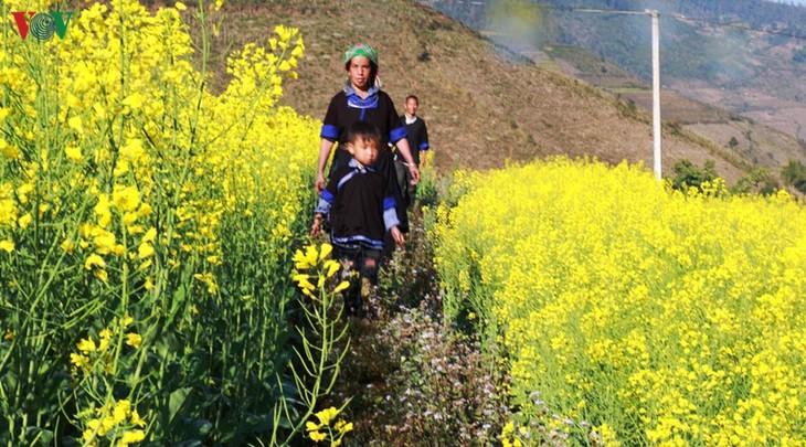 Ảnh: Mùa vàng hoa cải trên danh thắng ruộng bậc thang Mù Cang Chải - ảnh 6