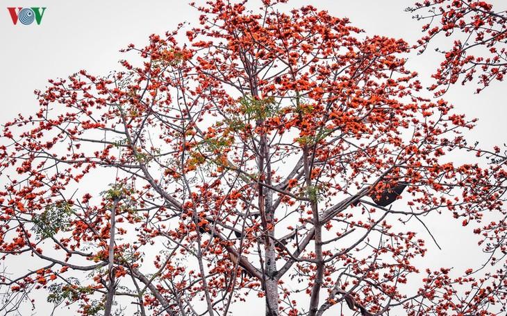 Đẹp ngỡ ngàng cây gạo hoa rực đỏ với hàng chục đàn ong tìm về làm tổ - ảnh 4