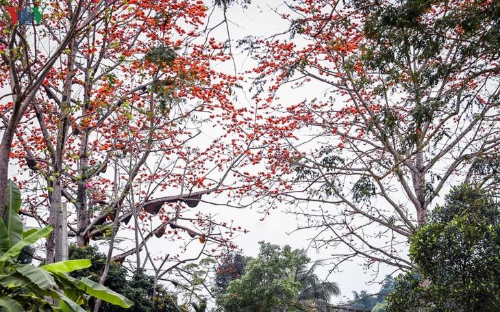 Đẹp ngỡ ngàng cây gạo hoa rực đỏ với hàng chục đàn ong tìm về làm tổ - ảnh 5
