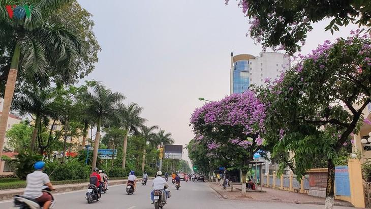 """Hoa bằng lăng khoe sắc """"nhuộm tím"""" đường phố Hà Nội - ảnh 1"""