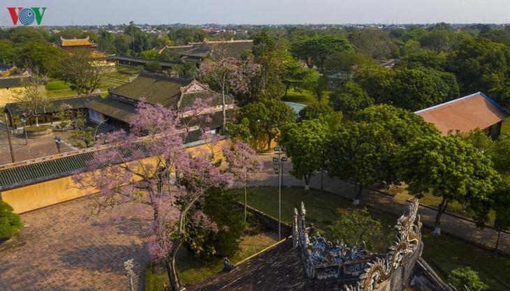 Huế - Thành phố của những sắc hoa mùa hạ - ảnh 2