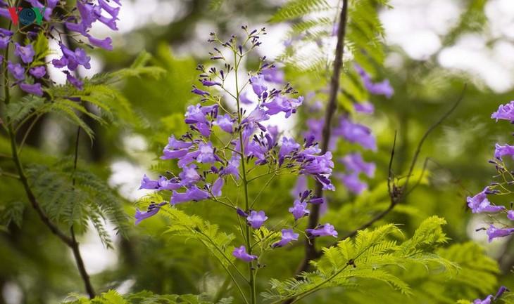 Huế - Thành phố của những sắc hoa mùa hạ - ảnh 9