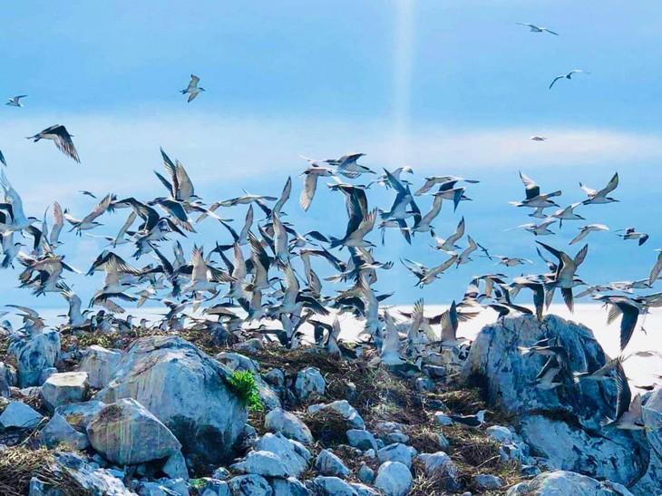 Hòn Trứng - sân chim giữa biển tại Việt Nam - ảnh 6