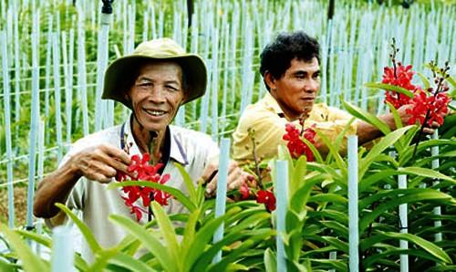 Iniciales logros en construcción de nuevo campo en Ciudad Ho Chi Minh - ảnh 2