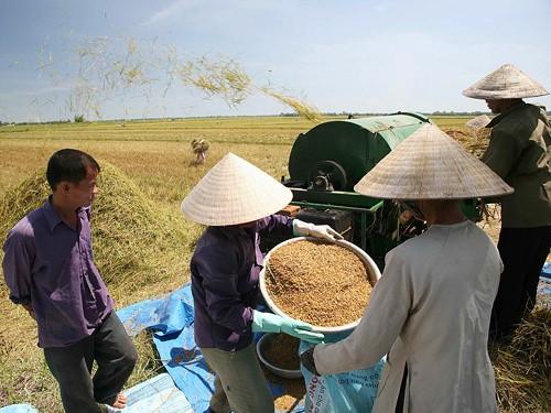 Iniciales logros en construcción de nuevo campo en Ciudad Ho Chi Minh - ảnh 3