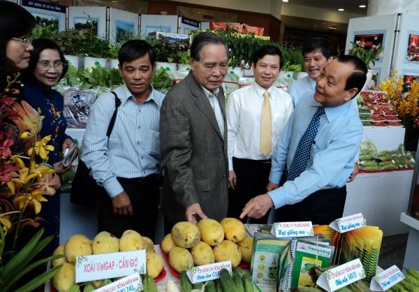 Iniciales logros en construcción de nuevo campo en Ciudad Ho Chi Minh - ảnh 1