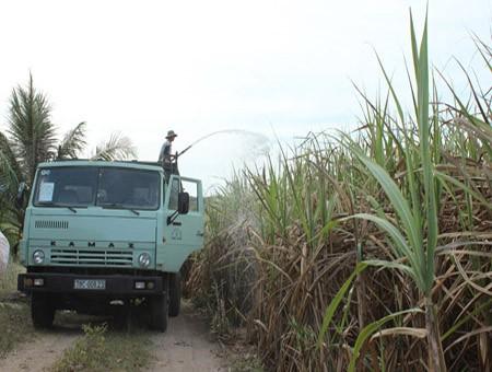 Edificación del nuevo campo en Gia Lai: Cambios basados en ventajas existentes  - ảnh 1