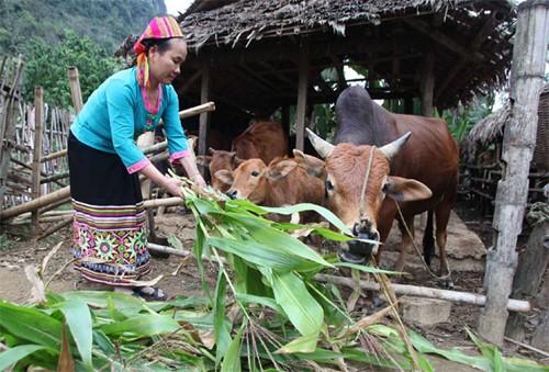 Prioriza Vietnam inversiones para el desarrollo socioeconómico en zonas de minorías étnicas - ảnh 2