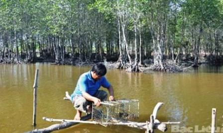 Cultivo de especies acuáticas en el dosel arbóreo revive manglares en Tra Vinh - ảnh 2