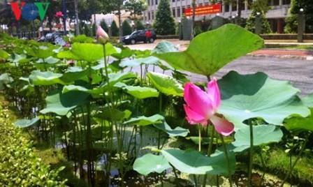 Desarrollo turístico en tierra de loto Dong Thap - ảnh 2