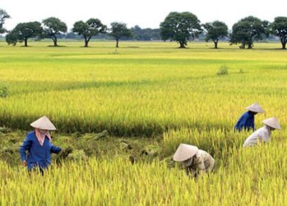 Camino a Ninh Binh, la tierra invisible - ảnh 2