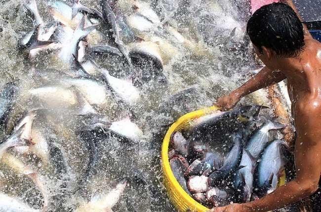 Vietnam en Cumbre de Acuicultura de Sudeste Asiático y el Pacífico - ảnh 1