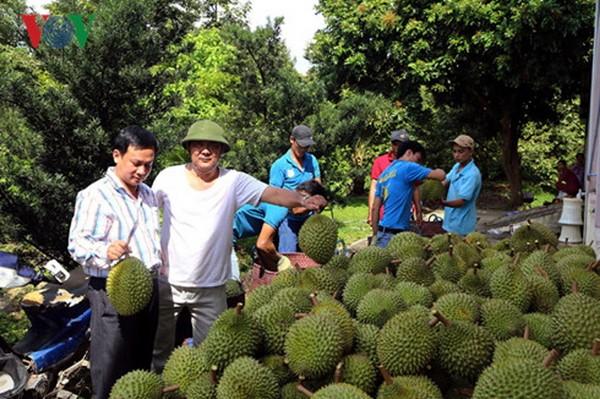Desarrollo del sector privado, una necesidad urgente de la economía vietnamita - ảnh 2