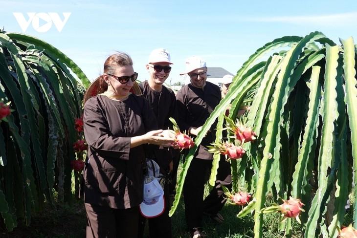 Binh Thuan desarrolla el turismo vinculado con huertos frutales - ảnh 2