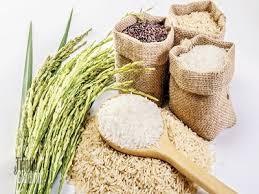 FAO dự báo Việt Nam thuộc tốp 5 nước có sản lượng gạo lớn nhất năm 2017 - ảnh 1