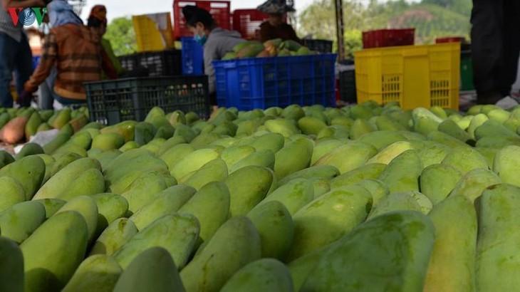 จังหวัด เซินลา ส่งเสริมการส่งออกสินค้าการเกษตร - ảnh 1